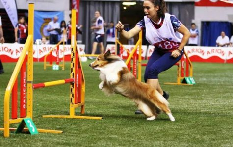 From Agility Trainer to Sports Psychologist