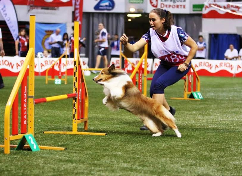 Warren Hills alumnus of 2014 Kathleen Oswald leads the way for her dog in the Spain World Agility Open in 2016.  (Photo Courtesy of Kathleen Oswald)