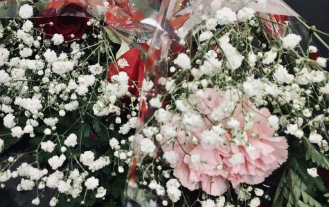 Roses Go on Sale for Valentine's Day